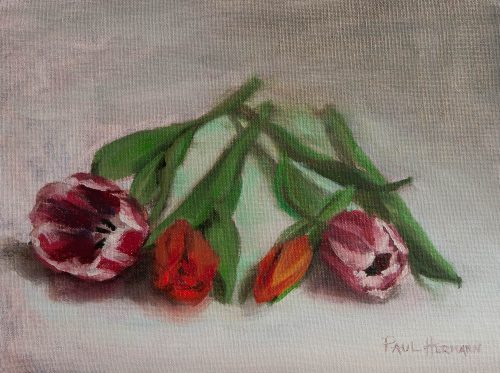 Tulips Laying Down. Oil on canvas board, 9 x 12 inches, 2011. By Paul Hermann.
