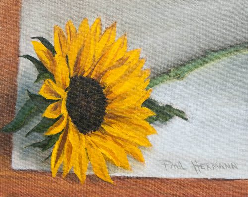 Sunflower on White Paper. Oil on canvas board, 8 x10 inches, June 2011. By Paul Hermann.