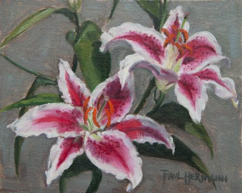 Japanese Lilies. Oil on canvas board, 8 x 10 inches, January 2012. By Paul Hermann.
